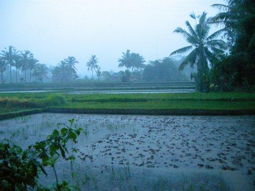 Индонезия - Климат