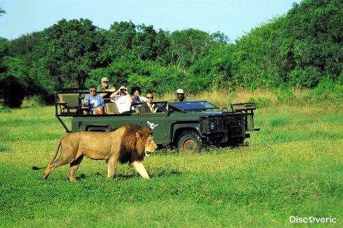Куда поехать на сафари в Африке?