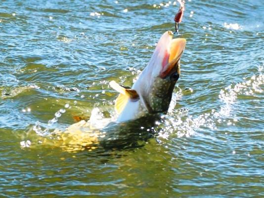 клевые дни для рыбаков