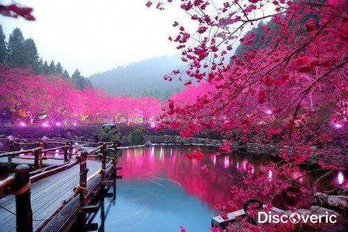 Дорого ли отдыхать в Японии? Средние цены.