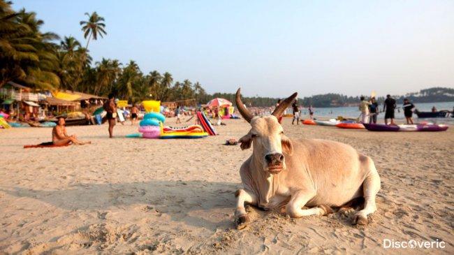 Завораживающая Индия и остров Гоа